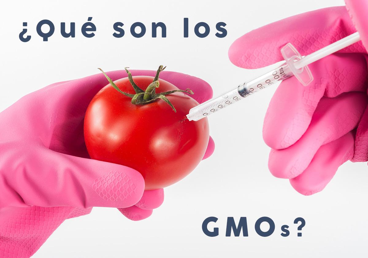 alimentos transgenicos o GMO